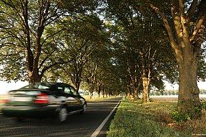 Bei sommerlichen Wetter fährt ein Auto auf einer Landstraße, die von beiden Seiten mit Bäumen umsäumt ist. Das Auto ist verwischt dargestellt, aufgrund der gefahrenen Geschwindigkeit.
